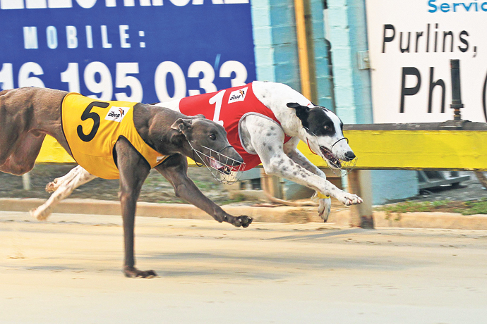 The greyhound industry will continue in NSW