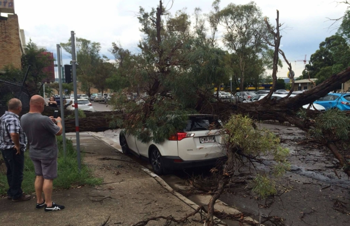 A tree fell on this car in the Penrith CBD